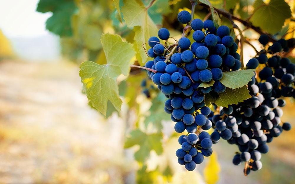 Maine Winery