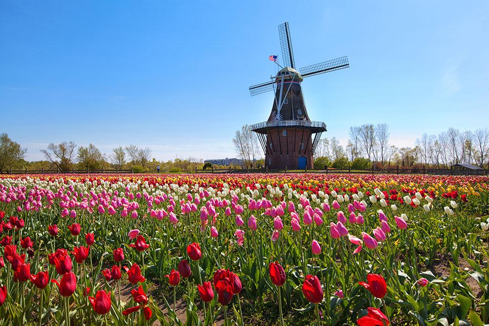 Holland MI