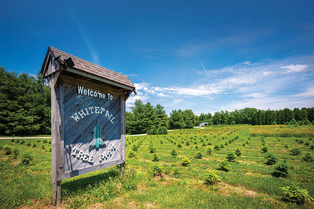 Whitetail Tree Farm signage